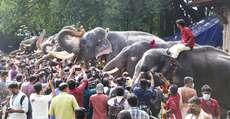 കർക്കട മാസാചരണത്തിൻ്റെ ഭാഗമായി തൃശൂർ വടക്കുന്നാഥ ക്ഷേത്രത്തിൽ നടന്ന ആനയൂട്ട്