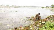 നെല്ല് സംഭരണം ; പത്തനംതിട്ട ജില്ല പുറത്ത്,  കർഷകർ പ്രതിഷേധവുമായി രംഗത്ത്
