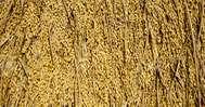 പുഞ്ചകൃഷിയുടെ വിളവെടുപ്പ് ഇഴയുന്നു; നെല്ല് സംഭരിക്കാതെ പാടശേഖരങ്ങളില് കെട്ടിക്കിടക്കുന്നു