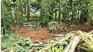 വന്യജീവികളോട് തോറ്റുമടങ്ങി 59 കുടുംബങ്ങള്,  വീടും കൃഷിയിടവും വനംവകുപ്പിന് കൈമാറും