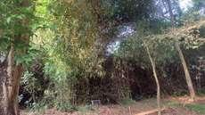 വീയപുരം സര്ക്കാര് സംരക്ഷിത വനം അവഗണനയില്, പ്രഖ്യാപനങ്ങള് 10 വര്ഷങ്ങള് കഴിഞ്ഞിട്ടും  ജലരേഖയായി