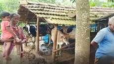 അട്ടപ്പാടിയില് ആദിവാസി ദമ്പതികള്ക്ക് നേരെ വെടിവയ്പ്, ആക്രമണം കൃഷിയിടത്തിൽ പശുക്കൾ കയറിയതിന്, അയൽവാസി അറസ്റ്റിൽ