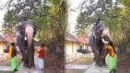 തൃശ്ശൂരില് ആനയെ ഉപദ്രവിച്ച ഒന്നാം പാപ്പാൻ അറസ്റ്റിൽ; മർദ്ദനത്തിന് കാരണം ഫോട്ടോയ്ക്ക് വേണ്ടി തലയുയർത്തിയില്ല