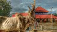 ആലുവ ശിവരാത്രിക്കും നിയന്ത്രണം: ബലിതര്പ്പണത്തിന് ഓണ്ലൈന് രജിസ്ട്രേഷന്