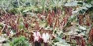 അടിമാലി മേഖലയില് കനത്ത മഴയിലും കാറ്റിലും വ്യാപക നാശനഷ്ടം; മണിയാറന് കുടിയില് വാഴത്തോട്ടം നശിച്ചു