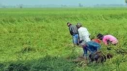 ചന്ദൗളിയും  പുതിയ വികസന മാതൃകകളും