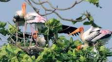 കൊവിഡ് വ്യാപനം:  കുമരകത്ത് പക്ഷിസങ്കേതം അടച്ചു