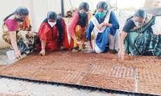 സൗജന്യ വിതരണത്തിന് പച്ചക്കറി തൈകള് തയ്യാറാക്കി കൗണ്സിലര്; തൈകള് വാര്ഡിലെ കുടുംബാംഗങ്ങള്ക്ക് എത്തിച്ചു നല്കും