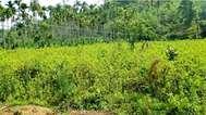 ജീവന് ഭീഷണിയായി ചീരവയലിലെ വൈദ്യുതി ലൈനുകള്