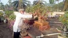 കൗതുകമായി ബോണ്സായി മരങ്ങളുടെ ശേഖരം