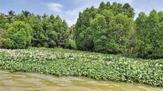 ചേറ്റുവ-പെരിങ്ങാട് കണ്ടല് പ്രദേശം ഇനി റിസര്വ് വനം