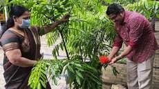 രാമായണ മാസത്തിലെ പ്രസാദം  കണ്ണശയിൽ ശിംശപ പൂവിട്ടു