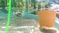 കൊവിഡ് കാലത്ത് മത്സ്യകൃഷിയില് നൂറുമേനി കൊയ്ത് കര്ഷകര്