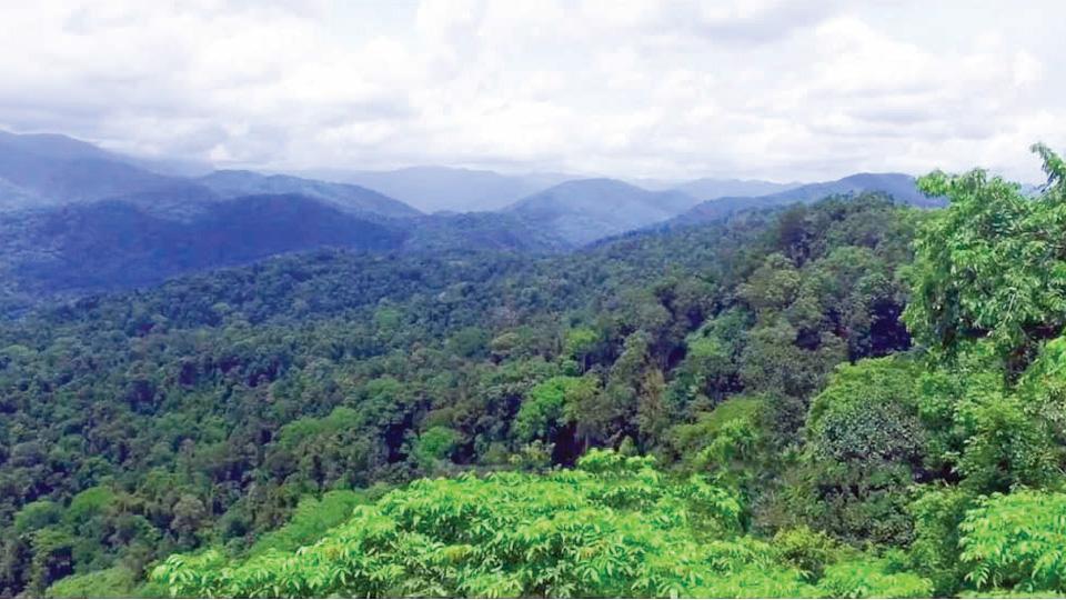 കുട്ടമ്പുഴക്കാട്ടിലെ തീപ്പാല
