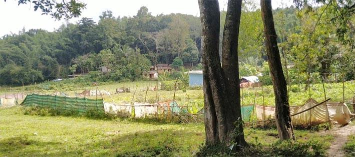 അടിസ്ഥാന സൗകര്യങ്ങളില്ലാതെ  ഓടക്കൊല്ലി വന ഗ്രാമം, 20 ഓളം കാട്ടുനായ്ക്ക കുടുംബങ്ങൾ ദുരിതത്തിൽ